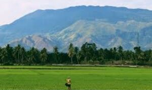 Potensi serta Persebaran Sumber Daya Alam di Indonesia