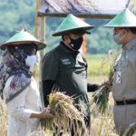 Anies Duluan Panen Padi BUMD DKI Jakarta di Cilacap, Apa Kabar Lumbung Pangan Pemerintah?