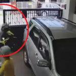 Video Viral!! Emak-Emak Naik Motor Tabrak Pagar Rumah Orang, Panik Dikejar Anjing