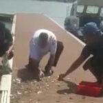 Viral Heboh! Fenomena Ikan Berlompatan ke Darat di Banyuwangi!