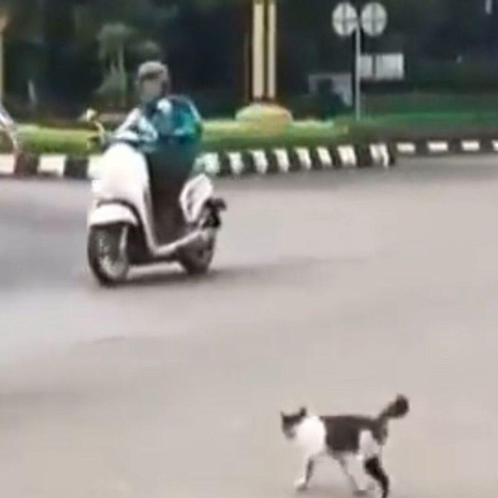 VIDEO!, Ojo Lali Berbuat Baik, Contohnya Pak Polisi Ini Bantu Kucing Menyeberang Jalan